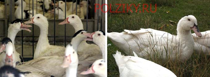 Витамины 8 in 1 Гравий для заполнения зоба птиц EA211