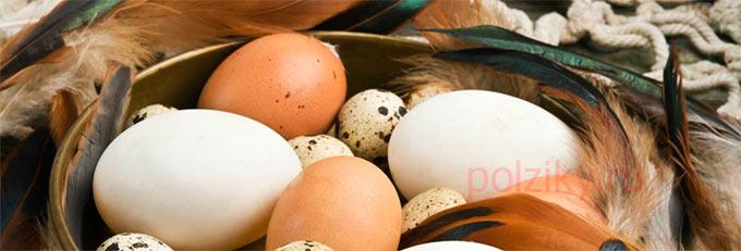 Симптомы аллергии на яйца