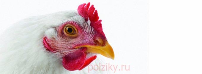 Состав премикса для куриц мясных пород