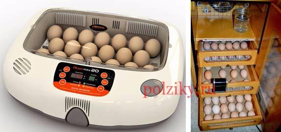яйцо инкубационное кур декоративных