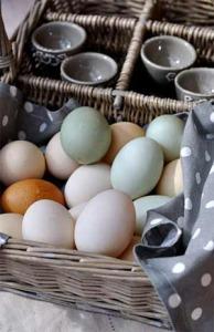 Где купить утиные яйца