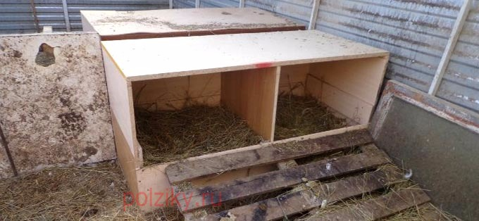 Что нужно, чтобы построить гнездо для гусей своими руками
