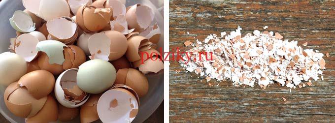 Как употреблять скорлупу куриных яиц