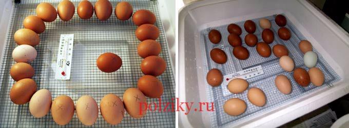 Как хранить инкубационные яйца куриц несушек