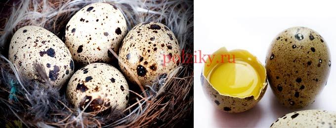 Сколько и как пить сырых яиц перепелок