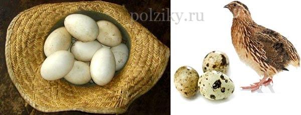 Сколько гусь несет яиц