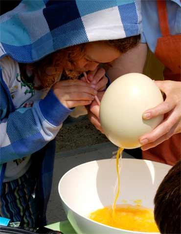 Польза страусиного яйца