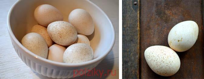 Инкубация яиц индюков Биг-6