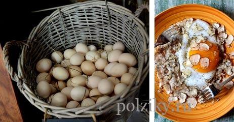 Польза гусиных яиц