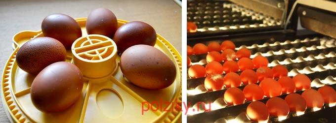 Как правильно проводить овоскопирование куриных яиц во время инкубации