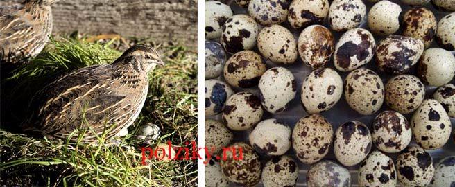 Какие требования к инкубационному яйцу