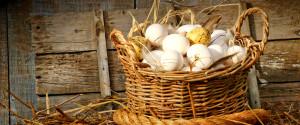 Сколько и как куры высиживают яйца