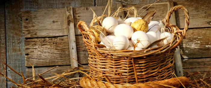 яйца как куры несут яйца почему они