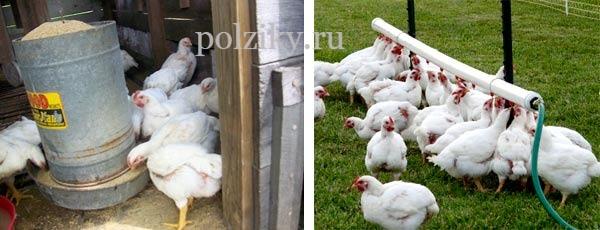Как сделать курятник для бройлеров цыплят своими силами