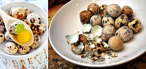 Как определить качество перепелиных яиц