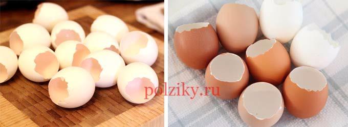 Состав скорлупы куриного яйца