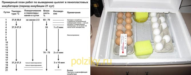 Регулирование температуры в инкубаторе