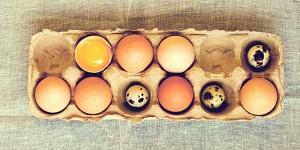Как проверить перепелиные яйца
