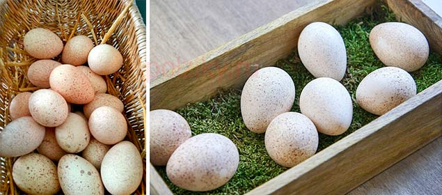 Все об индюшиных яйцах