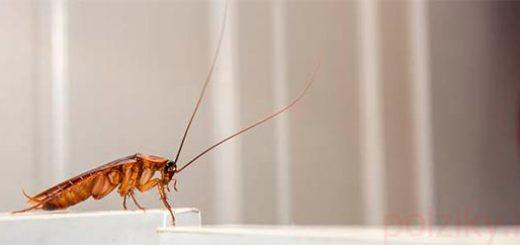 Как потравить тараканов с помощью яйца и борной кислотой