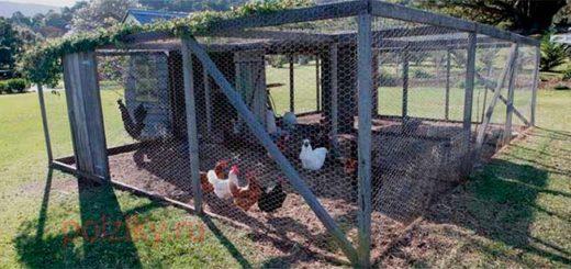 Особенности конструкции вольеров для кур и индюков