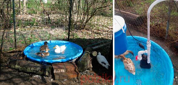 Прудик с фильтрацией для водоплавающей птицы