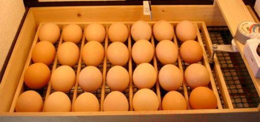 Собираем автопереворот для яиц в домашних условиях