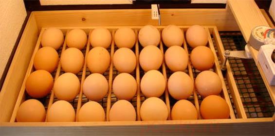 Как в инкубаторе сделать переворот яиц в инкубаторе своими руками