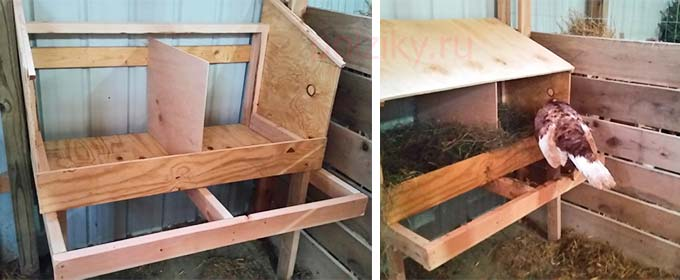 Сооружение гнездовья для нескольких индеек