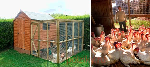 Строительство вольера для птицы на даче