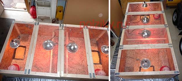 Как построить большой брудер для индюшат
