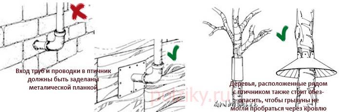Как обезопасить птичник от крыс