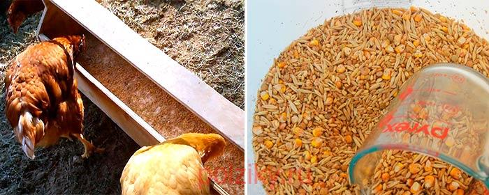 Где купить зерно курам