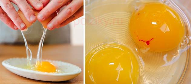 Кровь в желтке куриных яиц