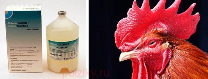 Вакцина от сальмонеллеза для кур и птиц