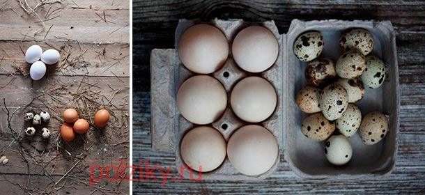 Что полезней куриные или перепелиные яйца