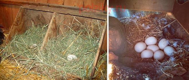 Как самому сделать гнездо 957