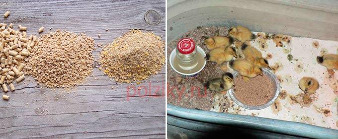 Как подготовить зерно для кормления утят