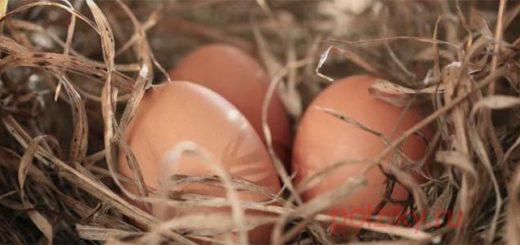 Муляж яйца для кур своими руками
