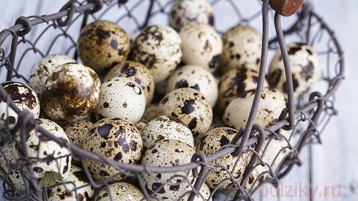 Какие породы перепелок самые яйценоские