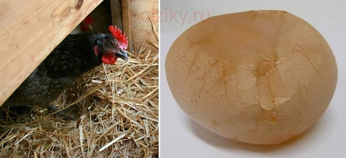 Тонкая скорлупа у куриных яиц причины