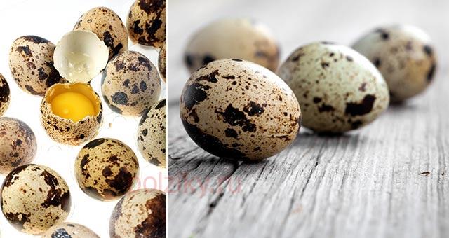 Чем полезны перепелиные яйца для женщин
