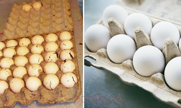 Как найти сальмонеллу в яйце
