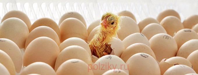 Аптечка для бройлеров цыплят