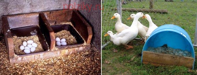 Где поставить гусиное гнездо и как его обустраивать