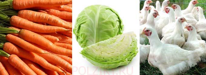Какими овощами и зеленью кормить бройлеров