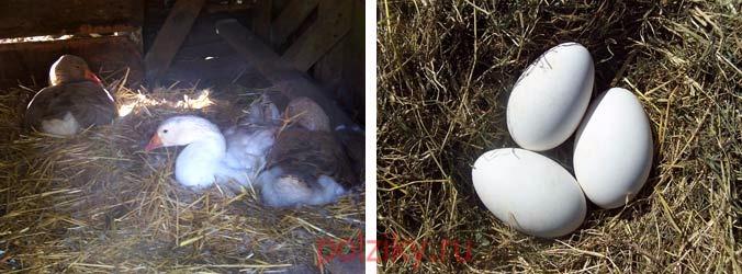 Как подготовить помещение к яйцекладке
