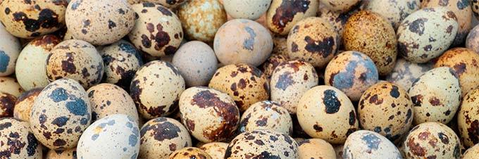 Кому противопоказан прием перепелиных яиц