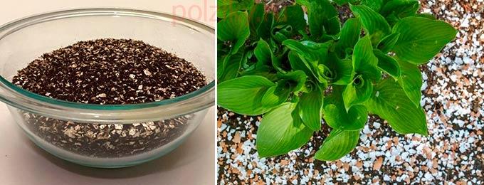 Садовое применение яичной скорлупы