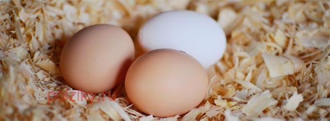 Сколько яиц подкладывать под курицу